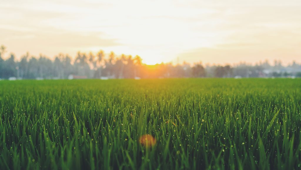 Creating the Perfect Lawn is Easier Than You Think